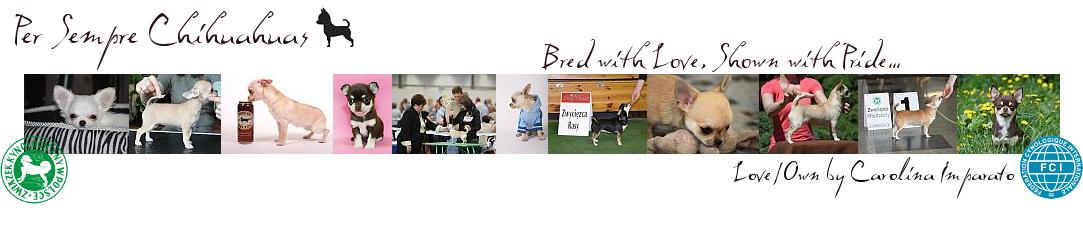 Hodowla Chihuahua – Warszawa – Per Sempre